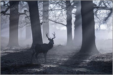 Stampa su plexi-alluminio  A male red deer stag waits in the early morning mists of Richmond park, London. - Alex Saberi