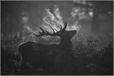 Adesivo murale  A large male deer stag bellows out in a cold winter landscape of Richmond park, London. - Alex Saberi