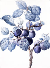 Adesivo murale Branch of a plum with fruits