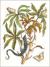 Stampa su plexi-alluminio  cassava with crocodile and butterfly metamorphosis - Maria Sibylla Merian