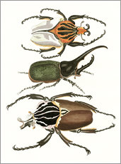 Stampa su plexi-alluminio  Large and rare beetles - German School