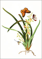 Stampa su plexi-alluminio  Butterflies and a dragonfly on a plant
