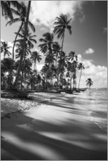 Stampa su plexi-alluminio  Tropical palm trees on a Brazilian beach in black and white - Alex Saberi