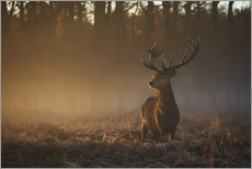 Adesivi murali  Stag in autumn sunrise - Alex Saberi