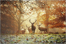 Adesivi murali  Stags and deer in an autumn forest with mist - Alex Saberi