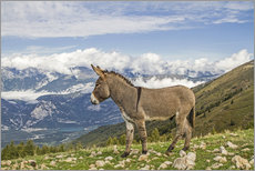 Adesivo murale  Donkeys on a lonely mountain meadow