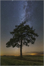 Adesivo murale Lonely tree in a field at night under the Milky Way in Vyazma, Russia.