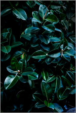 Mareike Böhmer Photography - Dark Leaves 4