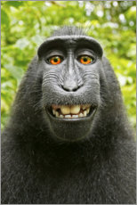 Tela  Monkey Selfie I - David Slater