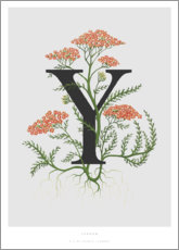 Poster Premium Y is for Yarrow