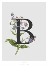 Poster Premium B is for Borage