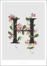 Poster Premium H is for Honeysuckle