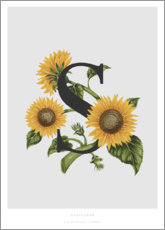 Stampa su tela  S is for Sunflower - Charlotte Day