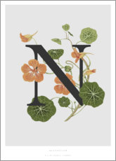 Poster  N is for Nasturtium - Charlotte Day