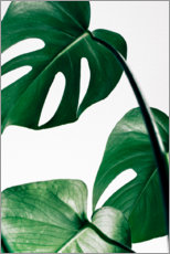 Poster Premium  Monstera - Art Couture