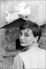 Poster Premium  Audrey Hepburn alla colombaia - Celebrity Collection