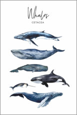 Poster  Whales - Art Couture