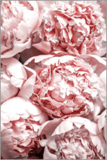 Stampa su tela  Peonie color salmone - Art Couture
