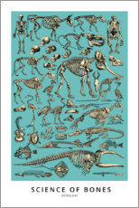 Poster Premium  Osteologia (inglese) - Wunderkammer Collection