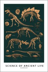 Poster Premium  Paleontologia - Wunderkammer Collection