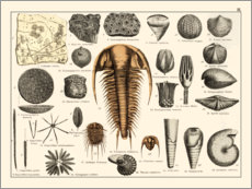 Poster Premium  Fossili II - Wunderkammer Collection