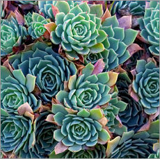 Adesivo murale  Succulente colorate - David Wall