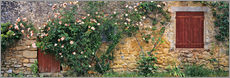 Adesivi murali  Climbing roses cover an old stone wall - Ric Ergenbright