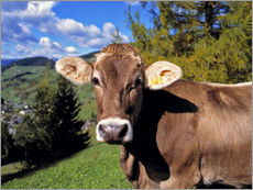 Adesivi murali  Startled Swiss cow in the Dolomites - Ric Ergenbright