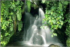 Adesivi murali  Small waterfall in the rainforest - Kevin Schafer