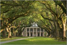 Stampa su plexi-alluminio  Oak Alley Plantation with a canopy of ancient oaks - Wendy Kaveney