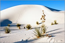 Adesivi murali  White Sands National Monument - Transverse Dunes and Soaptree Yucca - Bernard Friel