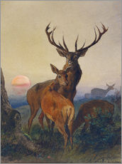 Stampa su plexi-alluminio  A Stag with Deer at Sunset - Charles Jones