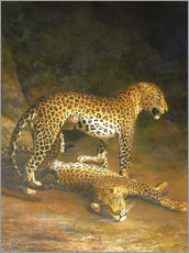 Stampa su plexi-alluminio  Two Leopards lying in the Exeter Exchange - Jacques Laurent Agasse