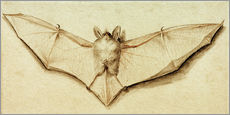 Adesivo murale  Bat with spread wings - Hans Holbein d.J.