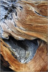 Adesivi murali  Detail from the trunk of an old pine tree - Dennis Flaherty