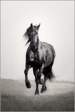 Stampa su plexi-alluminio  Horse Friesian in the steppe - Monika Leirich