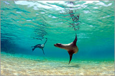 Adesivo murale  Sea lion lagoon Galapagos Islands - Paul Kennedy
