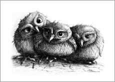 Stampa su plexi-alluminio  Three young owls - owlets - Stefan Kahlhammer