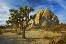 Adesivi murali  Joshua tree and rock - Charles Gurche