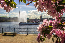 Adesivo murale  Cherry on the Alster in Hamburg for Spring - Dennis Stracke