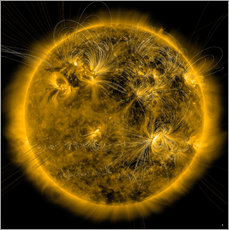 Adesivo murale Magnetic field lines on the Sun.