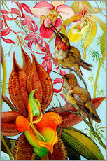 Adesivo murale  Exotic birds on orchids
