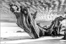 Adesivo murale  Old Tree Root on the Beach (monochrome) - Sascha Kilmer