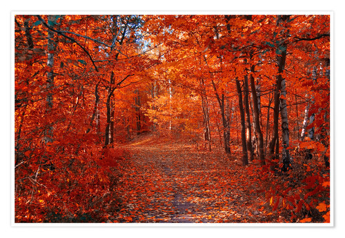 Poster Premium Colorful autumn