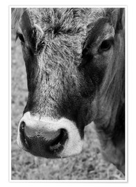 Poster  Cow - Walter Quirtmair