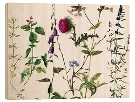 Stampa su legno  Eight Studies of Wild Flowers - Albrecht Dürer