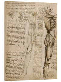 Legno  The muscles - Leonardo da Vinci
