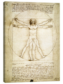 Tela  The Proportions of the human figure - Leonardo da Vinci