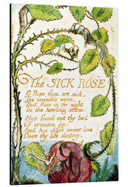 Stampa su alluminio  The Sick Rose - William Blake
