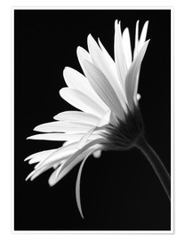Poster Premium  The flower - Falko Follert